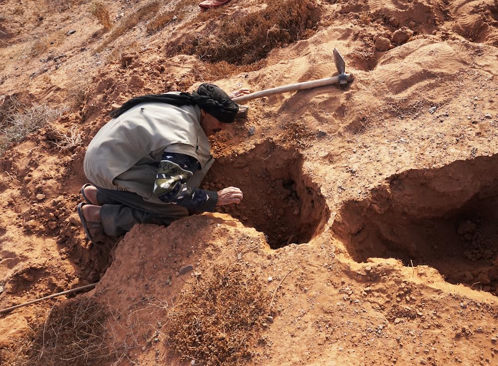Snake Hunting in desert