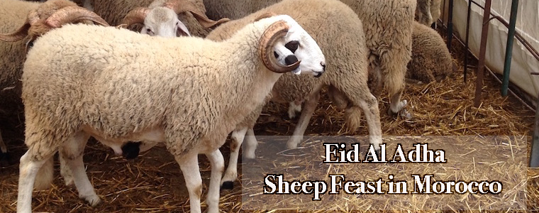 Eid al Adha, Sheep Feast in Morocco, Sacrifice, holiday