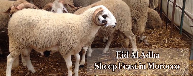 Eid al Adha, Sheep Feast in Morocco, Sacrifice, holiday