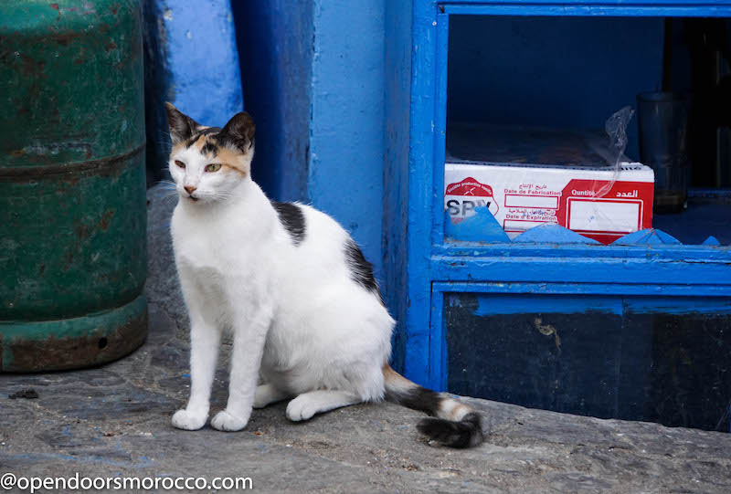 Cats of Chefchaouen 5