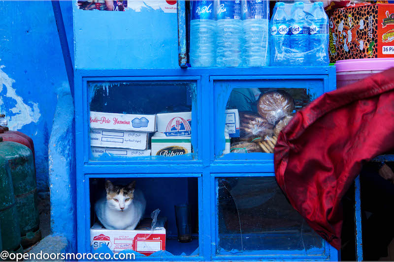 Cats of Chefchaouen 8