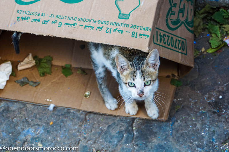 Cats of Chefchaouen 4