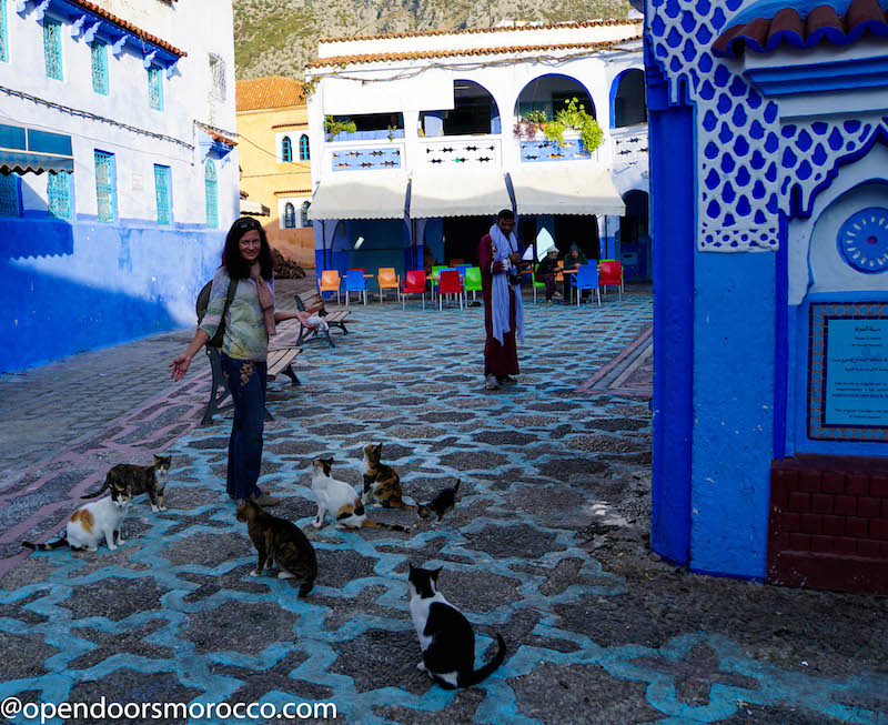 Cats of Chefchaouen 10
